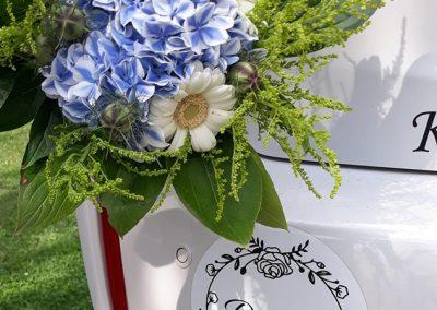 kytica modra hortenzia